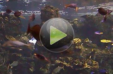 Webcam En Vivo En Acuario De Peces Tropicales Camaras En